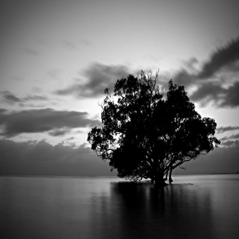 پس-زمینه-هنری-درخت