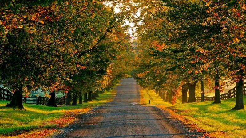 alone_road
